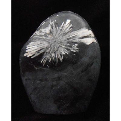 chrysanthemum stone china
