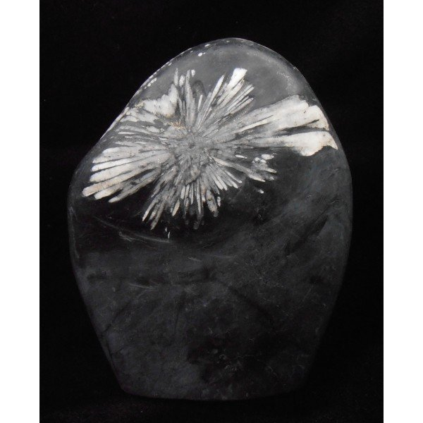 chrysanthemum stone china