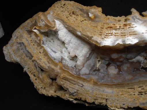 fossil coral withlacoochee river