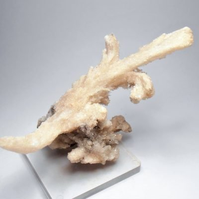 "Selenite - ""Rams Horn"" Formations from the Santa Eulalia District"