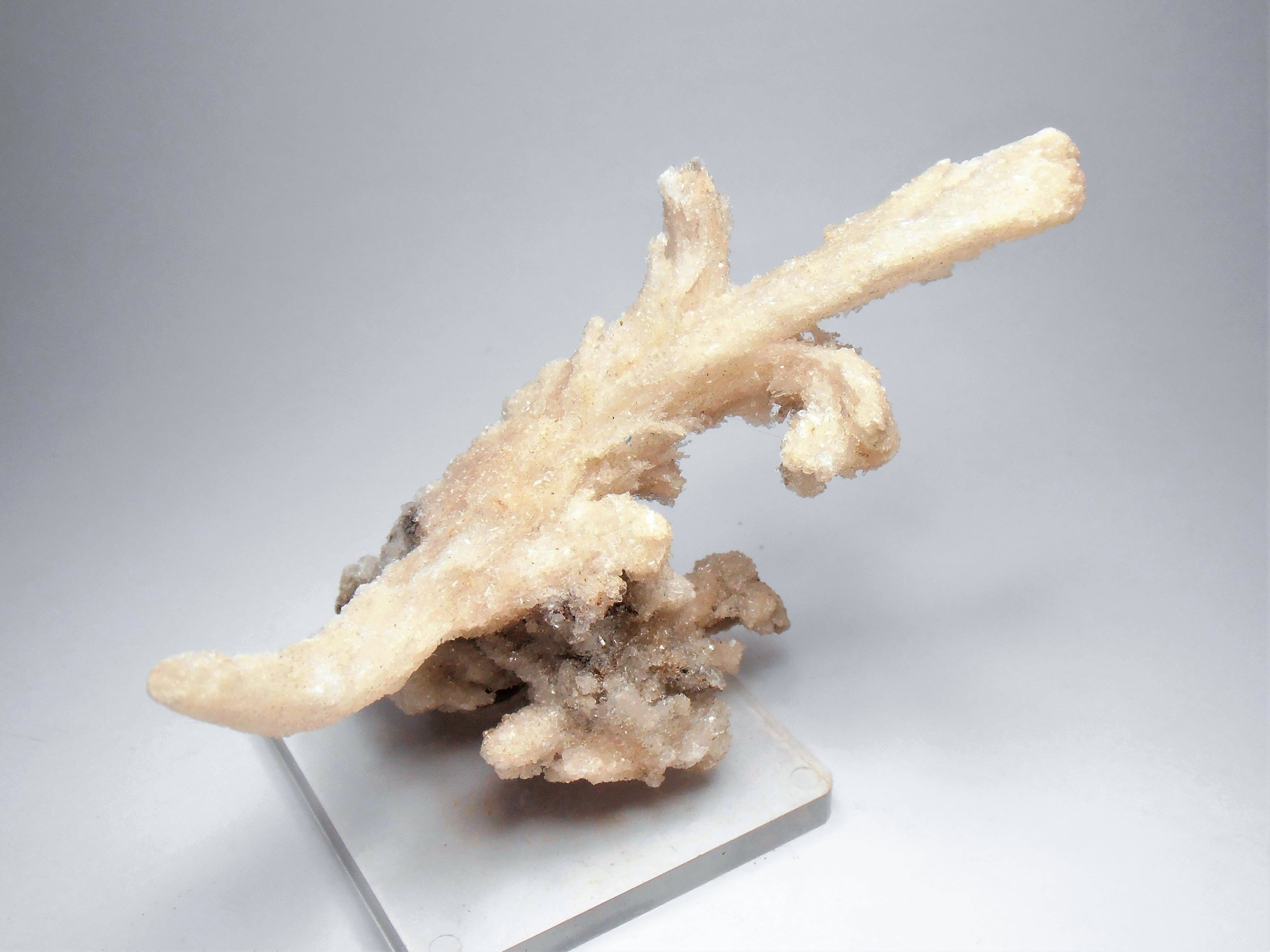 """Selenite - """"Rams Horn"""" Formations from the Santa Eulalia District"""