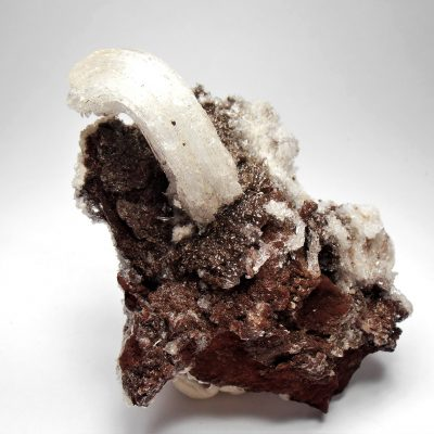 "Selenite - ""Rams Horn"" Formation from the Santa Eulalia District"