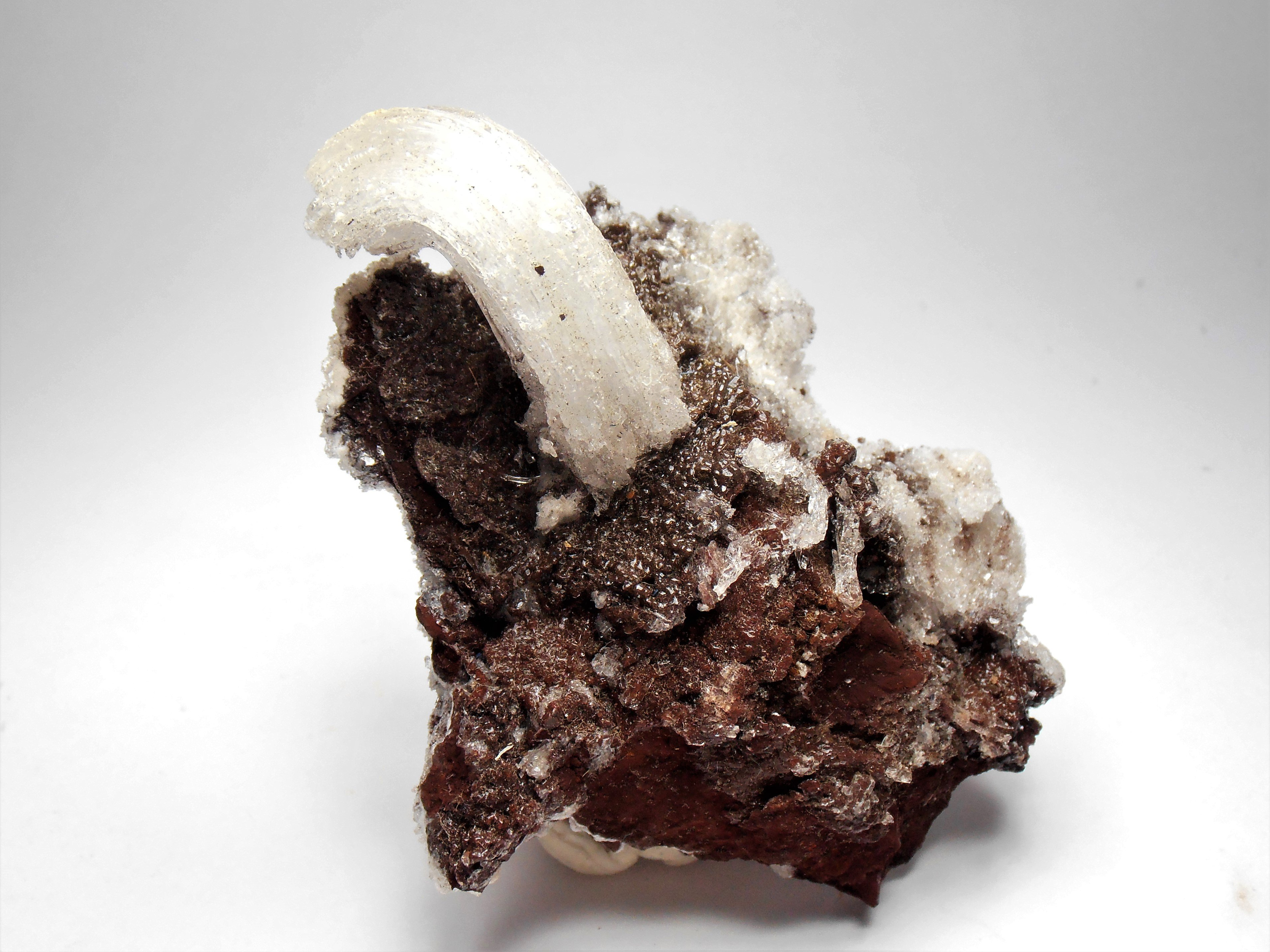 """Selenite - """"Rams Horn"""" Formation from the Santa Eulalia District"""