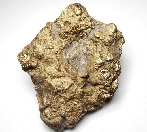 """Pyrite - Early Jurassic Sealife """"Death Bed"""" Fossil, Charmouth"""