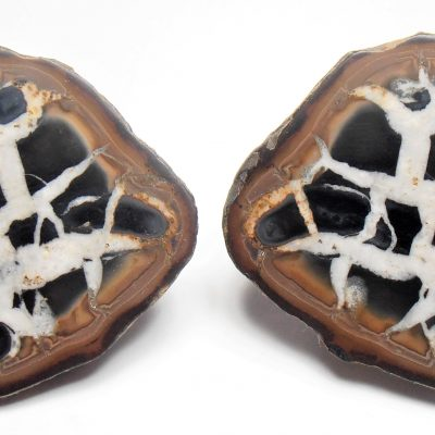 Septarian Nodule - Cut and Polished Nodule type Geode