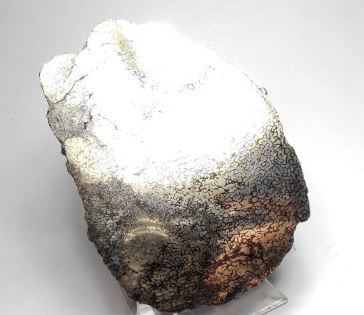 Pyrite - Sliced and Polished Fossil Dinosaur Bone from Cretaceous Period